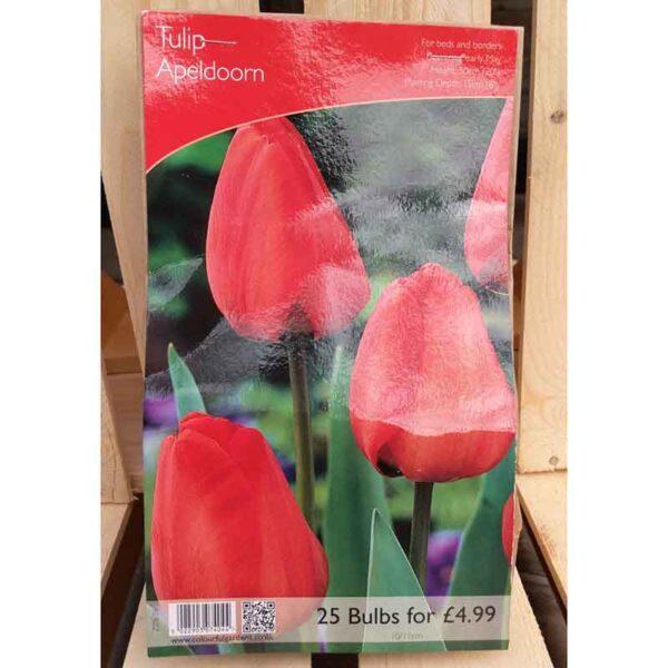 Tulip 'Apeldoorn' (25 Bulbs)