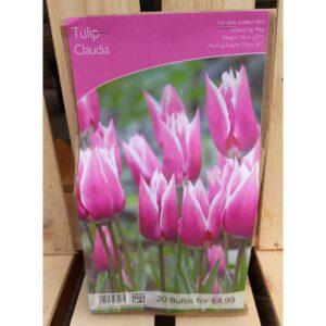 Tulip 'Claudia' (20 Bulbs)