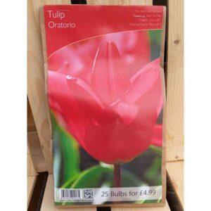 Tulip 'Oratorio' (25 Bulbs)