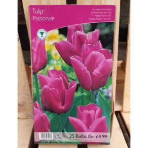 Tulip 'Passionale' (25 Bulbs)