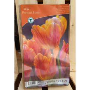 Tulip 'Princess Irene' (25 Bulbs)