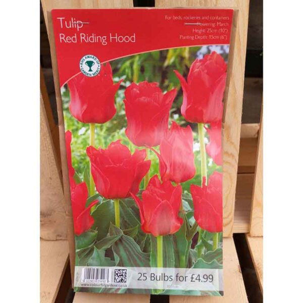 Tulip 'Red Riding Hood' (25 Bulbs)