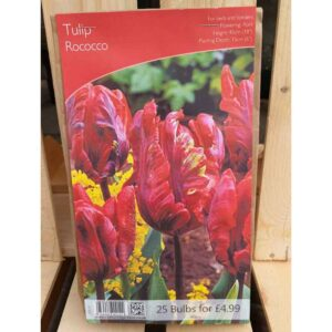 Tulip 'Rococo' (25 Bulbs)