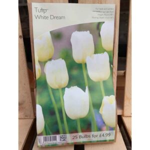 Tulip 'White Dream' (25 Bulbs)