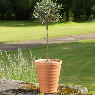 Yorkshire Flowerpots Ribbed Longtom (Medium)
