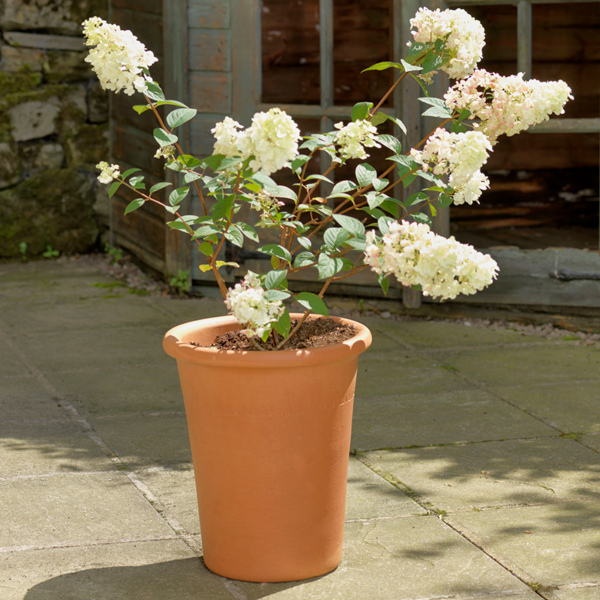 Tall Flowerpot with plant