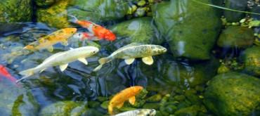 pond-care
