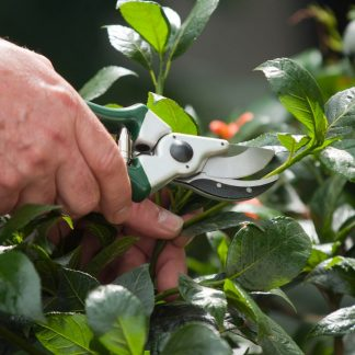 Secateurs & Pruning Tools