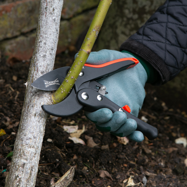 Clean cutting with the Wilkinson Sword Ratchet Anvil Pruner