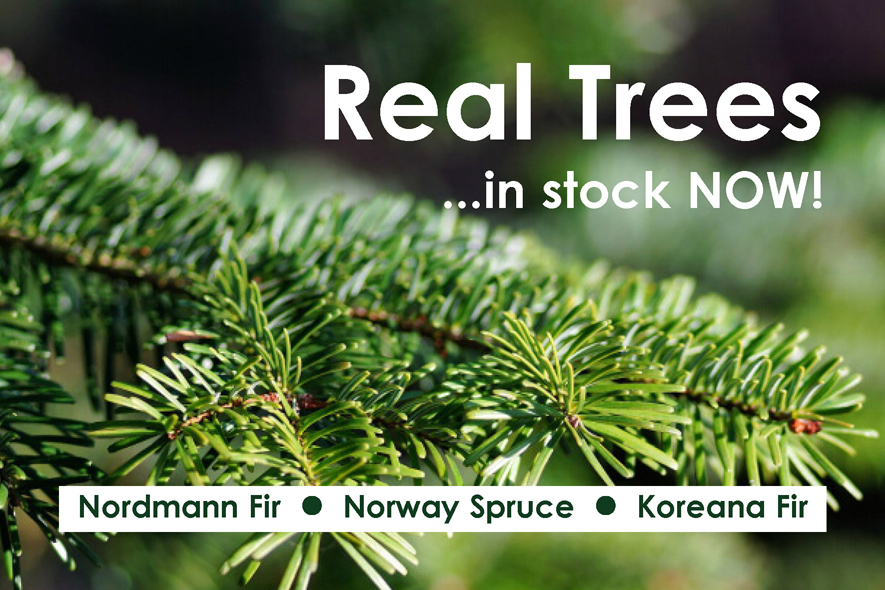 real trees NOW IN STOCK sma