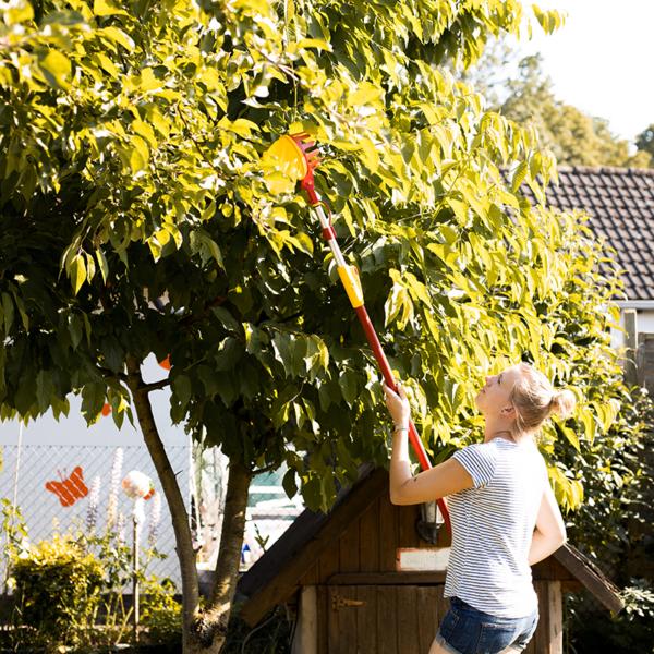 Reach tall growing fruit with the Wolf Garten multi-change Adjustable Fruit Picker & Telescopic Handle Set