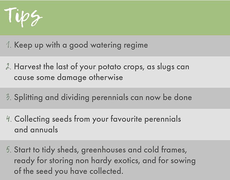 Tips for September