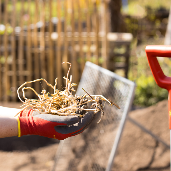Using Wolf Garten Washable Soil Care Gloves